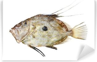 Papier peint vinyle Zeus Faber poissons