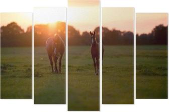 Pentáptico Cavalo da mãe com o potro na terra de exploração agrícola no por do sol. geesteren. achter