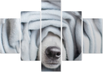 Dog wrapped in a scarf Pentaptych