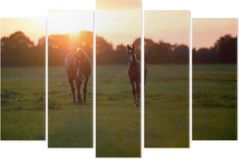 Mother horse with foal on farm land at sunset. Geesteren. Achter Pentaptych