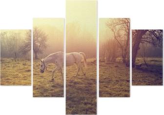Pentaptyk Vacker vit häst