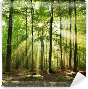 Forest Pesunkestävä Valokuvatapetti