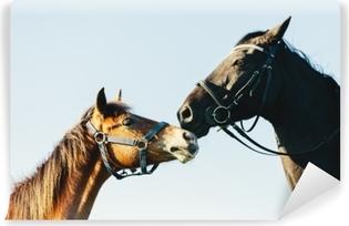 Kaksi puhdasrotuista hevosta sininen taivas taustalla Pesunkestävä valokuvatapetti