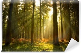 Kaunis metsä Pesunkestävä Valokuvatapetti