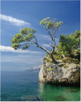 Plakat Berømt vakker stein med furutrær i Brela i Kroatia