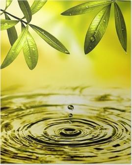 Blätter hængen über Wasser Plakat
