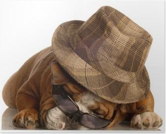 Plakat Bulldog ler på en annen hund kledd med klovn perle • Pixers ... cb3ad28d63235