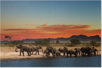 Flokke af elefanter i afrikanske savanne Plakat