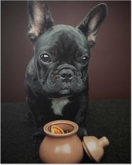 Fransk bulldog Plakat