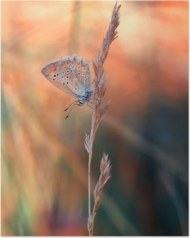 Butterfly Plakat HD