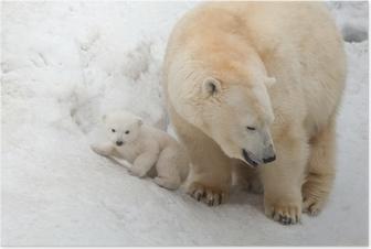Hvid bjørn Plakat