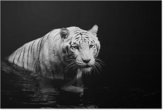 Hvid tiger Plakat