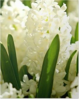 Hvide hyacinter Plakat
