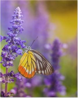 Insekter og blomster Plakat