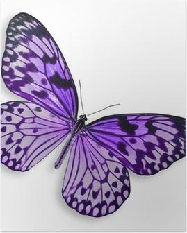 Plakat Lilla Butterfly flyr