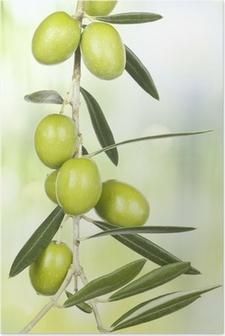 Plakat Olivengren