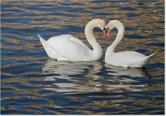 Romantiske svaner i foråret. Plakat