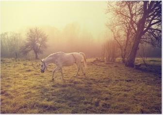 Smuk hvid hest Plakat