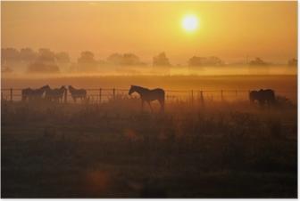 Sonnenaufgang auf einer pferdeweide Plakat