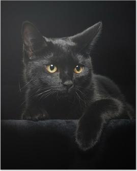 Sort kat med gule øjne Plakat