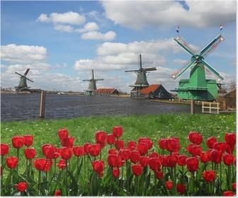 Traditionelle hollandske vindmøller med røde tulipaner, Amsterdam, Holland Plakat