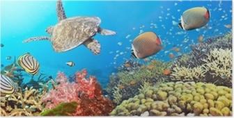 Plakat Undervanns panorama
