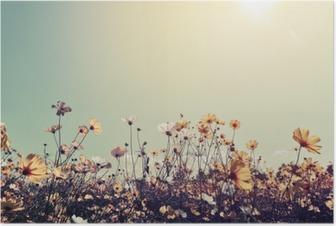 Plakat Vintage landskap natur bakgrunn av vakre kosmos blomst felt på himmelen med sollys. retro fargetone filtereffekt