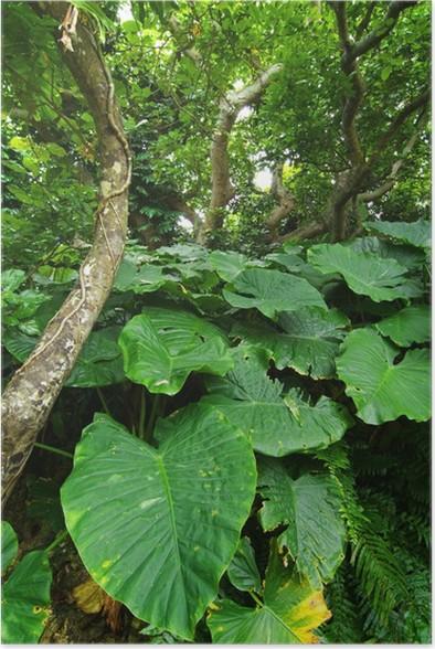 Plakát 亜 熱 帯 植物 の 森 - Květiny