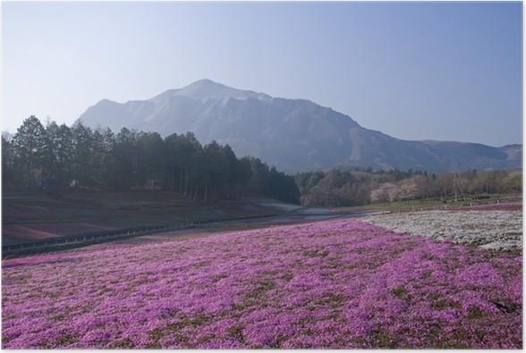 Plakát 芝 ザ ク ラ と 武 甲 山 - Květiny