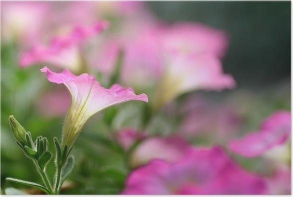 Plakát ペ チ ュ ニ ア - Domov a zahrada