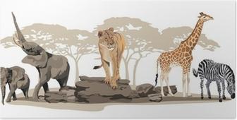 Plakat Afrykańskie zwierzęta