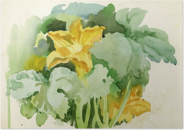 Plakát Akvarel Kolekce Flora: Zucchini Flower - Umění a tvorba