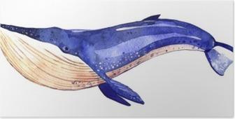 Plakat Akwarela wieloryba, ręcznie malowane ilustracji na białym tle