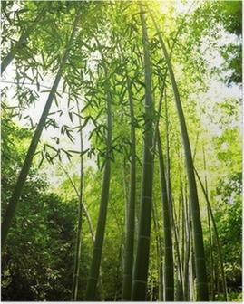 Plakat Bambus lesie tła