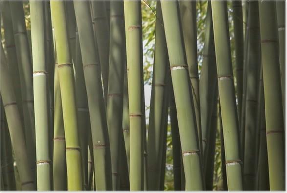 Plakát Bambusy - Témata