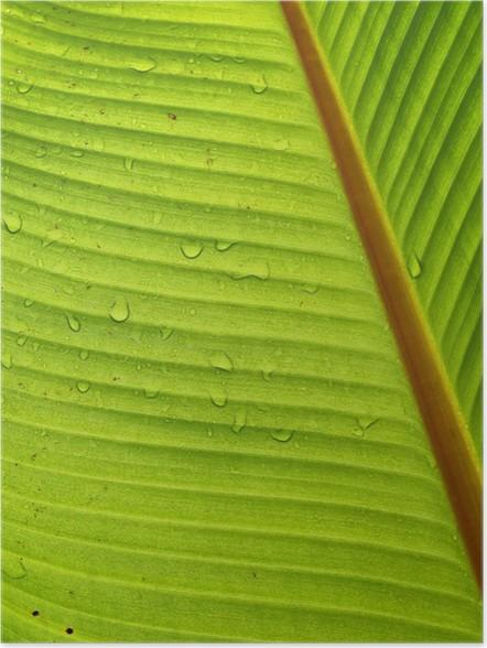 Plakát Banánový list s rosou detailním - Rostliny