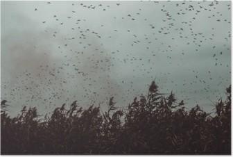 Plakát Banda ptáků letící v blízkosti třtiny v temném sky- vintage stylu black and white