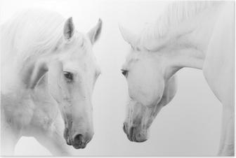 Plakat Białe konie