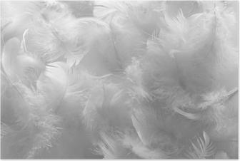 Plakat Białe pióra