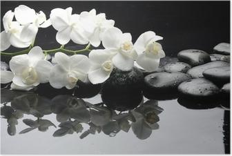 Plakat Bliska Biała orchidea z kropli wody z kamienia