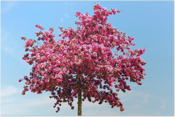 Plakát Bloss - Roční období