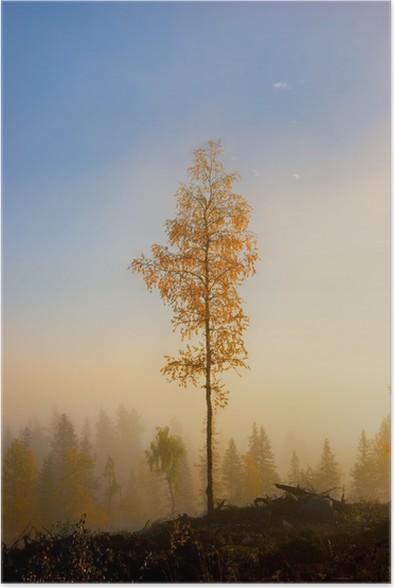 Plakát Bříza na podzim - Roční období