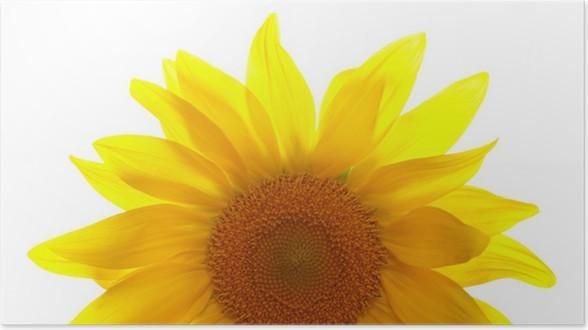 Plakát Část slunečnice na bílém pozadí - Roční období