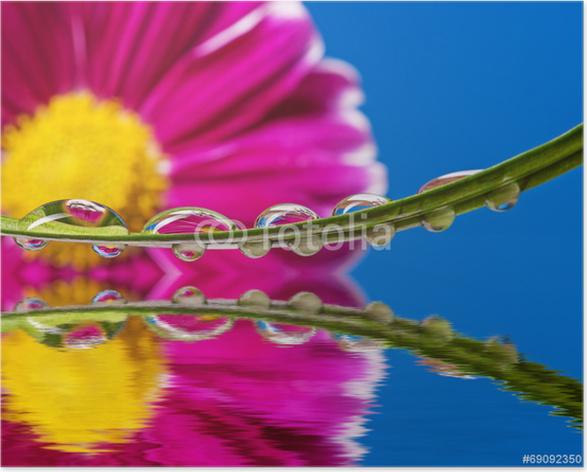 Plakát Červený květ a kapky rosy na listu - Květiny