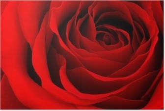 Plakat Czerwona róża