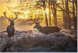 Plakat Czerwony jeleń