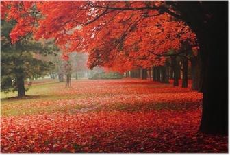 Plakat Czerwony jesienią w parku