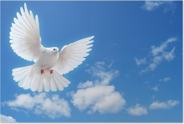 Plakát Dove ve vzduchu s křídly dokořán - Ptáci