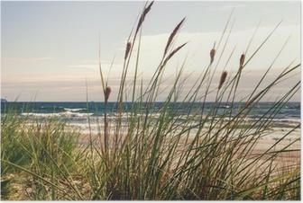 Plakat Dune trawy w świetle poranka :)