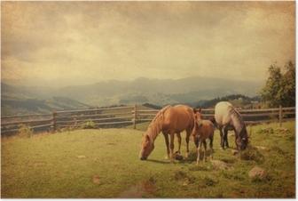 Plakát Dva koně a hříbě na louce. textura papíru.